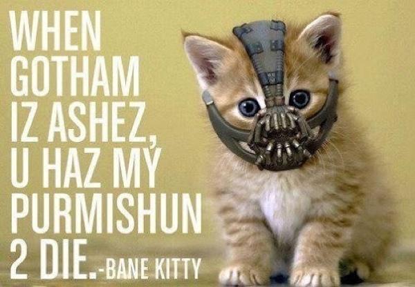 bane-kitty
