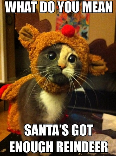 what-do-you-mean-santas-got-enough-reindeer-christmas-kitten-cat-meme